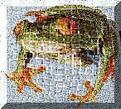 FrogDog Central WebRing